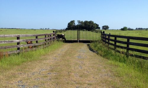 50 Gated & Fenced Rolling Acres
